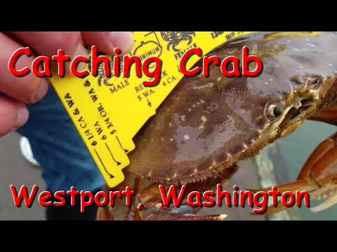 How to Catch Crabs - Dungeness and Red Rock Crabbing Tips