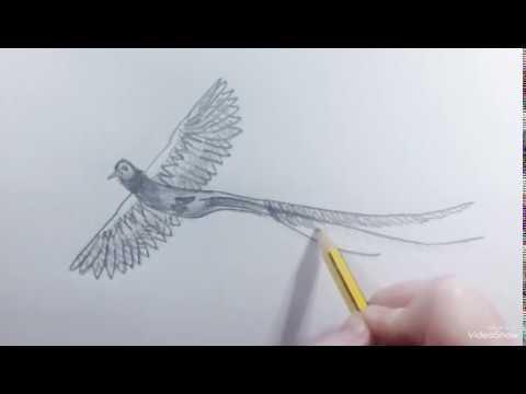 How to draw a Bird Quetzal - Como dibujar un Ave Quetzal