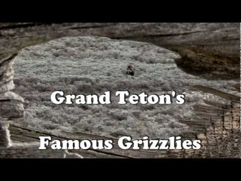 Grand Teton Parks Grizzly Bears 399 & 610