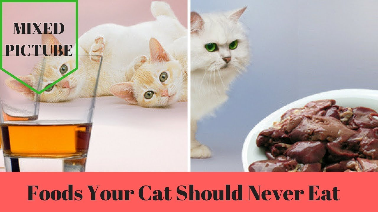 19 Foods Your Cat Should Never Eat VIDEO