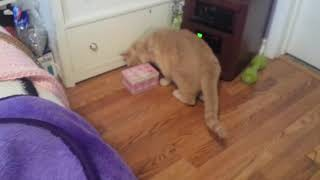 Pure Balance Grain Free Cat Food Review (By My Cats)