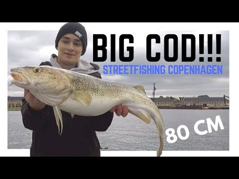 My Biggest Cod Ever!! Strike On Camera // Streetfishing Copenhagen 2018