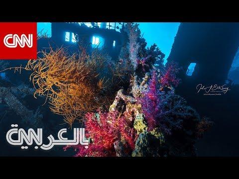 أفضل مواقع الغوص بالسعودية  - نشر قبل 23 ساعة