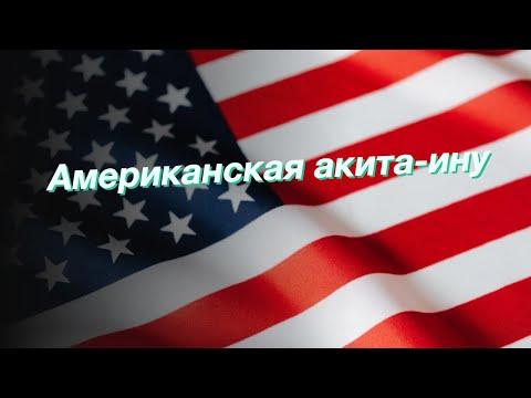 Американская акита-ину