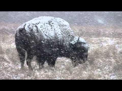 Maxwell Wildlife Refuge on a Snowy Day