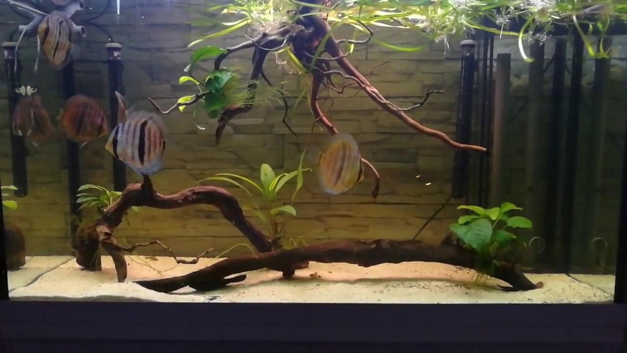 Heckel Rio Wild Discus Aquarium