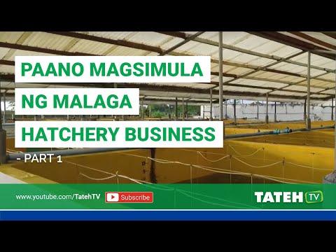 Paano Magsimula Ng Malaga Hatchery Business - Part 1 | TatehTV Episode 75