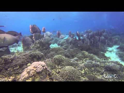 BumpHead ParrotFish Invasion SIPADAN
