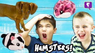 Dog CHASES HAMSTERS in a House! Cute Toy Review and Play with HobbyKidsTV