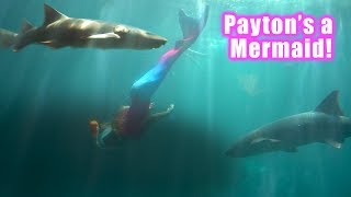 Payton swims with Sharks!