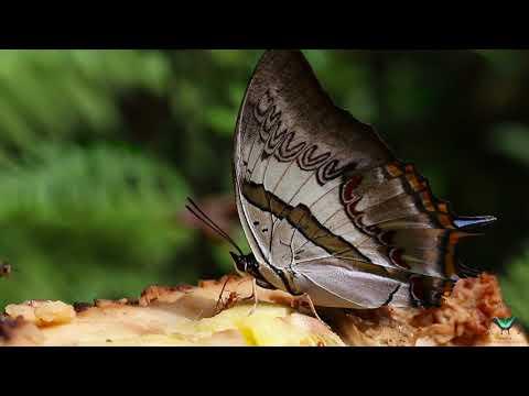 'Life of Butterflies' - Official Trailer