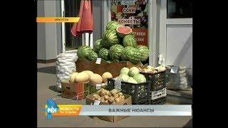 арбузы и дыни: как правильно выбрать качественный товар