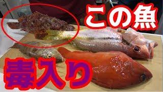 毒のある魚を料理したら超美味かった!!