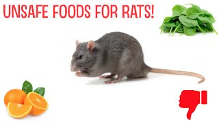 Unsafe Foods For Rats!