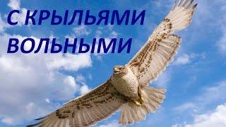 С крыльями вольными