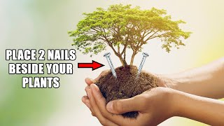 Place 2 Nails Beside Your Plants & See What Happens|5 AWESOME DIY IDEAS FOR YOUR GARDEN|Garden Hacks