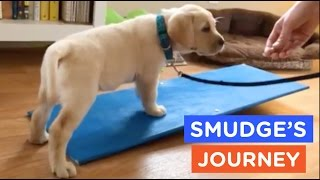 A Guide Dog's Life: Smudge's Journey Ep. 4 | The Dodo