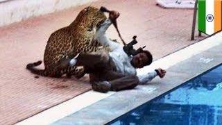 В индийскую школу зашёл леопард