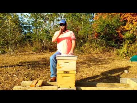 What is the cost of getting started in hobby  beekeeping ?