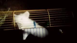 Уход и содержание декоративного кролика в доме