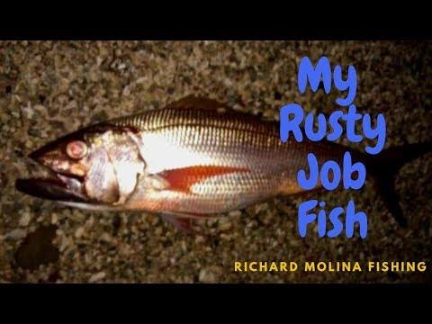 My Rusty JOB Fish (8.2kg)