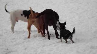 Dogs At Play - Dog Park Pals