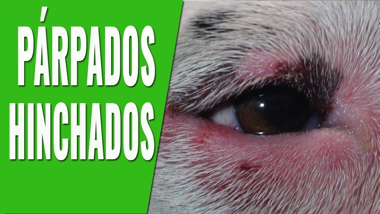 inflamacion del parpado superior en perros
