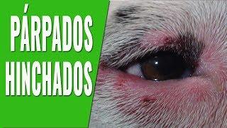 Tratamiento hinchados ojos alérgica de reacción