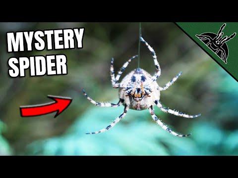 This HUGE SPIDER CONFUSED Me
