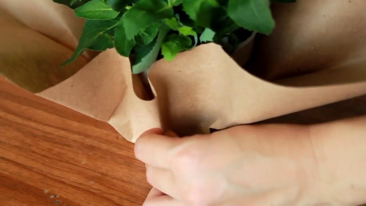 Как упаковывать цветы в горшке