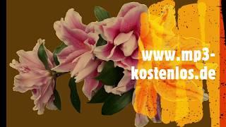 dibab music Op. 01.067 Dauerfunk 7, Saxophon, Gitarre, Piano, Schlagzeug