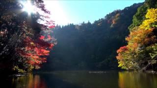 2014年11月27日撮影 (猪の川往復) 【ウーマン・イン・チェインズ】ティ...