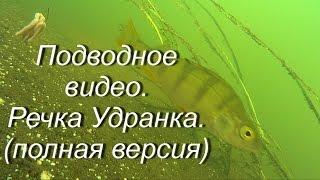 Подводное видео.Речка Удранка.(полная версия)Underwater video. Udrank's small river. (full version)