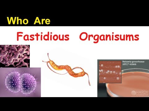Who Are Fastidious Organisms ? ( Clear Overview )