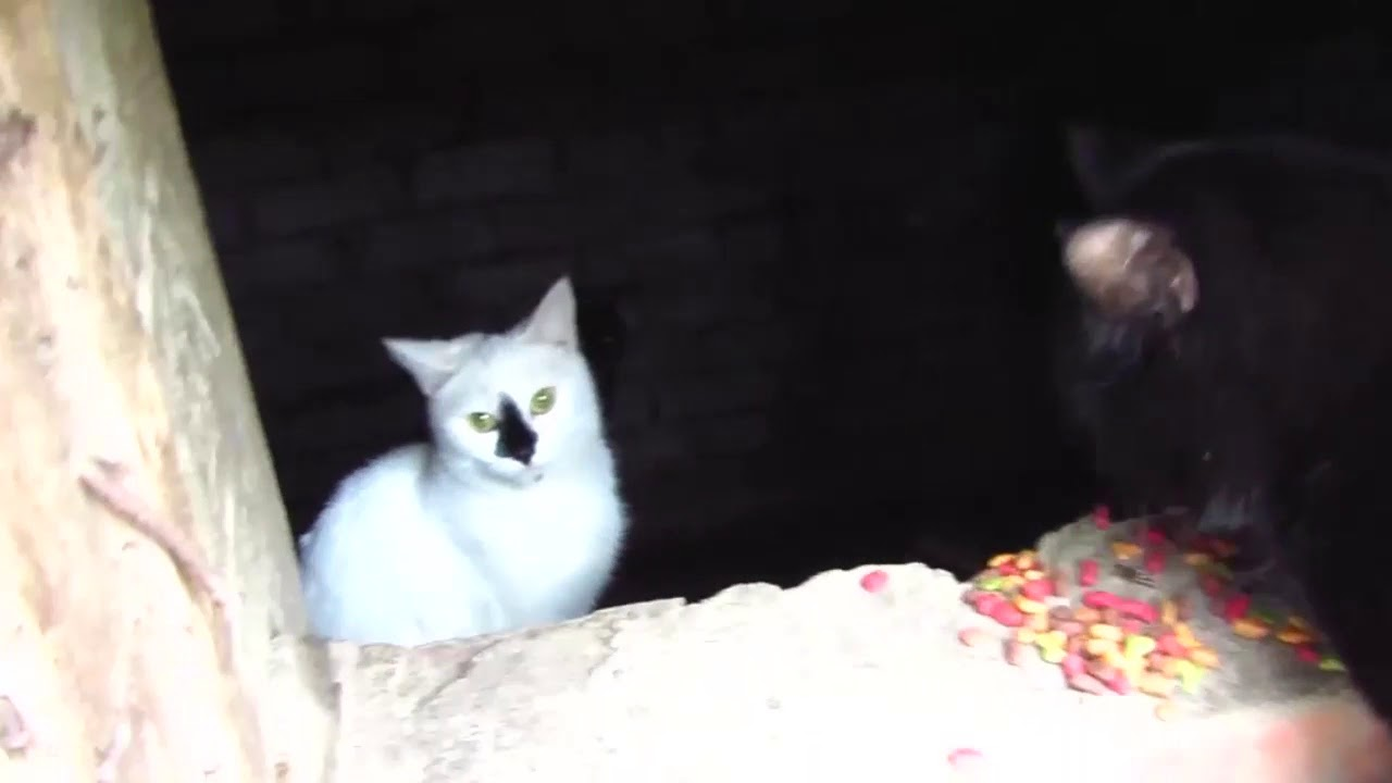 Scared cats jumping from basement11 - YouTube