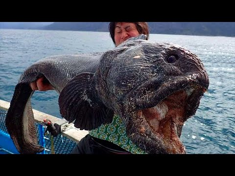 10 Most TERRIFYING Discoveries Made In The Deep Ocean!