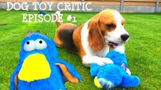 "Dog Toy Critic ""louie The Beagle"" Episode #1 : Kong Dodo"
