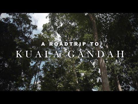 Travel Malaysia: Bathing elephants in Kuala Gandah, Pahang