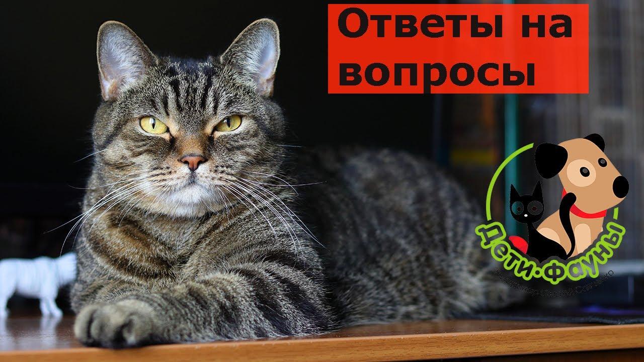 24.10.20 Ветеринар Сергей и кот Сэмыч отвечают на вопросы о кошках и собаках