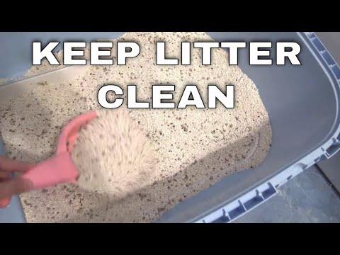 Keep litter box clean . Cats like a clean litter box