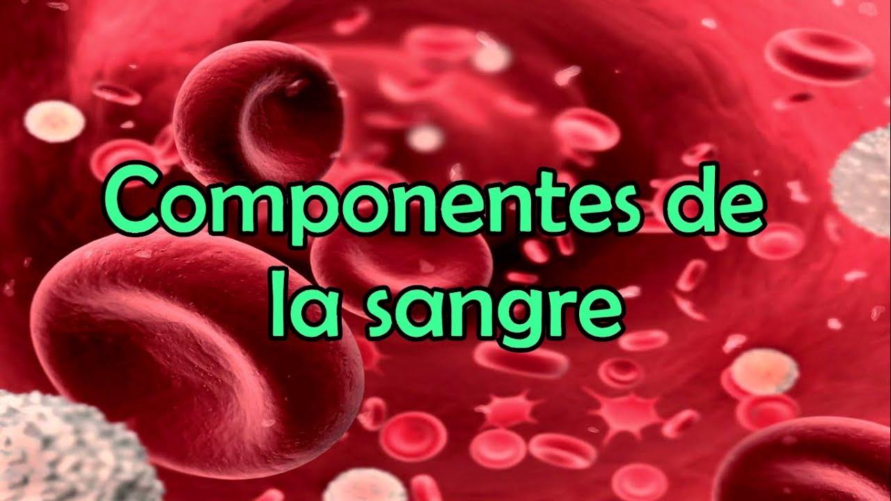 Los Componentes De La Sangre