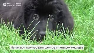 Собаки-спасатели на пляжах Москвы