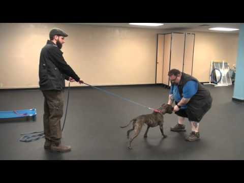 Proofing The Come Command | Dog Training with Tyler Muto