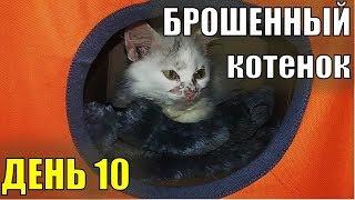 Брошенный котенок  День десятый Спасение бездомного котенка Турецкая ангора?