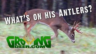 Deer Hunting Strategies | How Thermals Change the Way We Hunt (#472) @GrowingDeer.tv