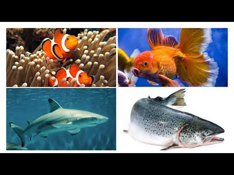 Lesson 3: Science 4 (Mammals,Birds,Fish,Reptiles And Insects)