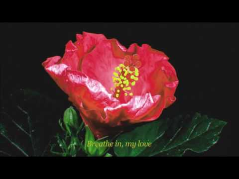 The Chain Gang of 1974 - Wallflowers (Official Lyric Video)