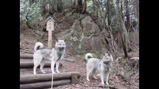 青葉の季節に霊峰位山へ行ってきました 熊が出没かも ワンコと一緒なら...