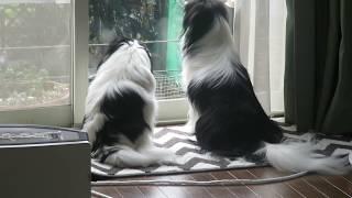 窓辺を警備中、チラチラ動く視線。ふと瞬間、至近距離でお互い目が合っ...