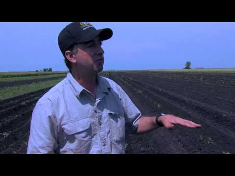 Cover Crop Research at the WIU Allison Organic Research and Demonstration Farm